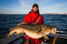 Johan Mikkelsen med en torsk på 30 kg som tog på en Westin Big Bob 730 gr i färg Fancy Cola utanför Sørøya.