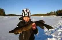 Per Stenberg passade på och fånga storfiskarn på bild.