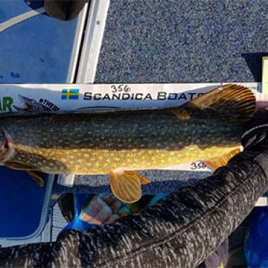 Magnus Toth Team Nyhem Finspång caught this pike 95 cm.