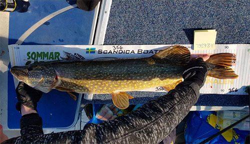 Magnus Toth från Team Nyhem Finspång fångade denna gädda på 95 cm.