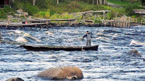 Sikfiske i Kukkolaforsen. Foto: Håkan Carlstrand.